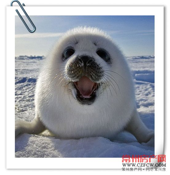 海豹可爱图片大全