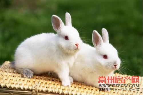 羊驼,小香猪,小白兔等可爱的动物们纷纷来袭,宝贝们,准备大饱眼福吧!