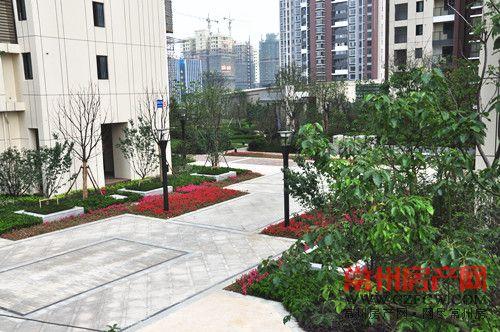校园斜坡绿化效果图