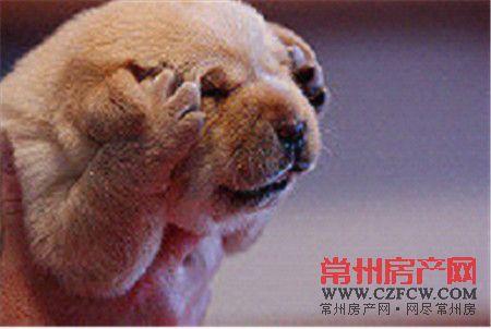头疼动物可爱图片