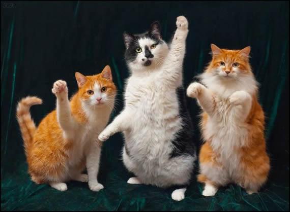 可爱猫咪举手图片