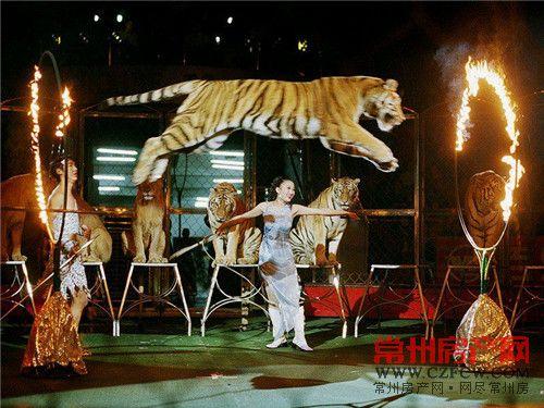 常州野生动物园马戏表演